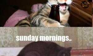 Счастливые субботние мемы