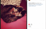 Ваш путеводитель по Instagram Cat Hashtags & Captions for Likes