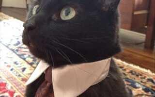 Симпатичные кошачьи мемы и забавные фото Китти