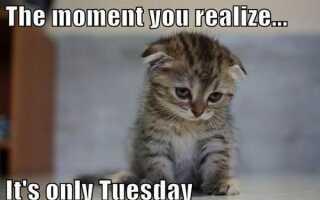 Вторник мемы, чтобы улучшить ваше настроение