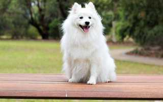 Дрессировка собак — Basic & Easy